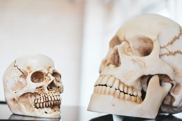 Two skulls were placed in the science lab.
