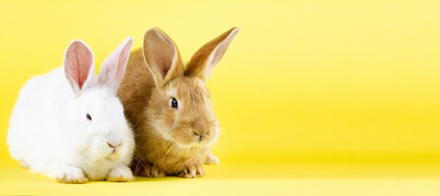 パステルイエローの背景に2つの小さなふわふわウサギ。あなたのユニークなテキストのための場所を持つ写真バナー