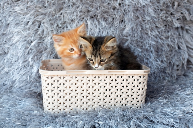 Two small kitten ssitting in a basket on a gray
