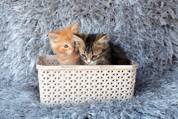 Два маленьких котенка, сидя в корзине на сером