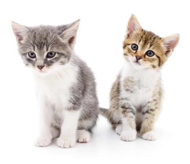 孤立した2匹の小さな子猫