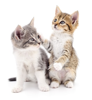 Two small kittens isolated