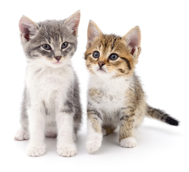 Два маленьких котенка на белом фоне.
