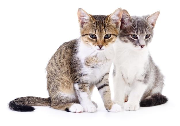 Два маленьких котенка на белом