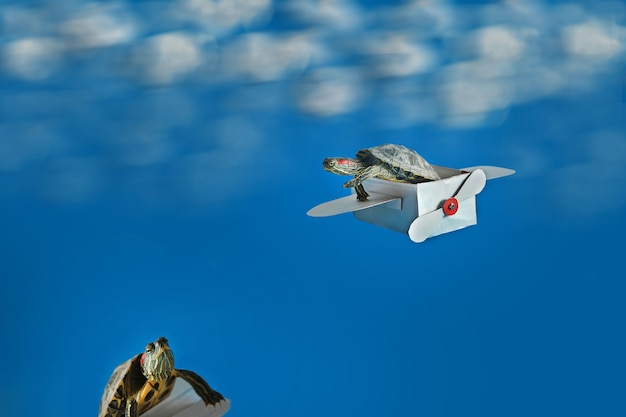 Two small turtles with a paper airplane on a blue background
