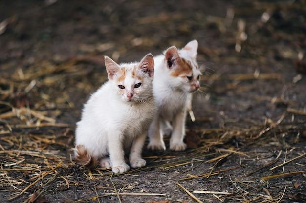 頭に茶色の斑点がある2匹の小さな白い猫