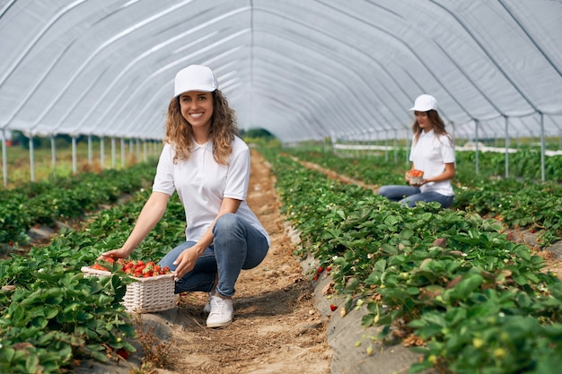 2人の笑顔の女性がイチゴを収穫しています