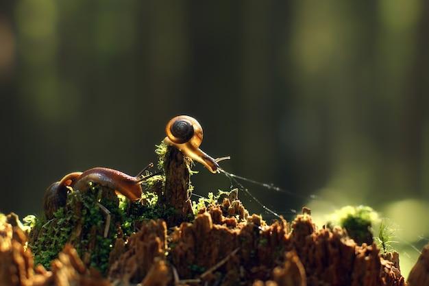 2つのカタツムリが朝の森の壊れた赤い切り株に沿って忍び寄り、太陽光線に照らされています。
