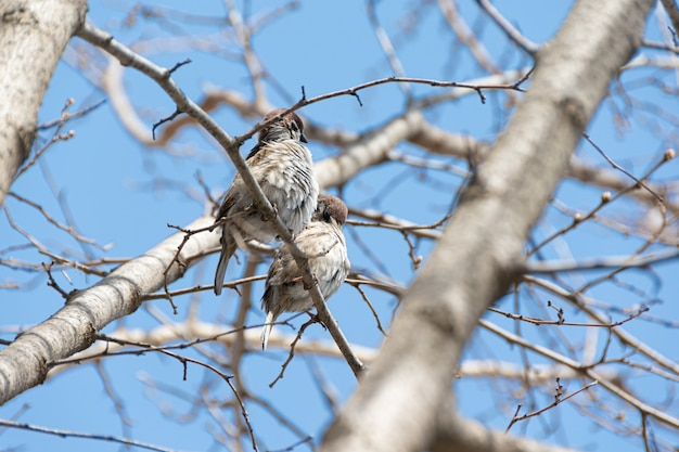 Due passeri seduto su un ramo