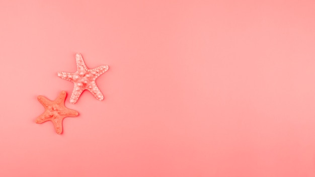 Two starfish on the coral background with copy space