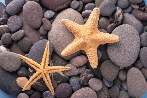 Two starfish on pebbles summer texture top view close up blue background