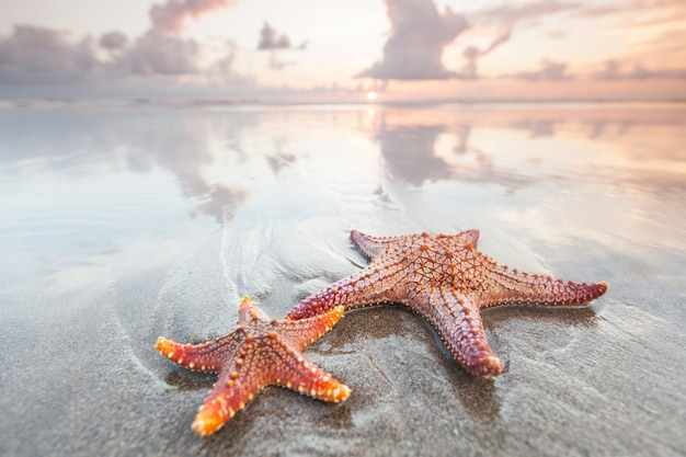 Two starfish in surf on summer beach at sunset