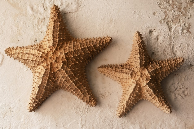 Two starfishes as decoration on the wall