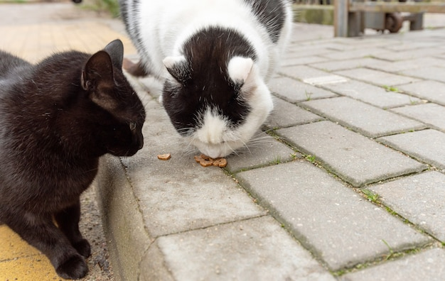 Two stray cats eat dry food on pavement in the fall. help stray animals, feeding.