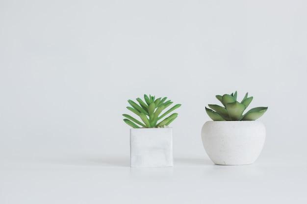 복사 공간이 있는 흰색 배경에 격리된 흰색 냄비에 두 개의 즙이 많은 식물