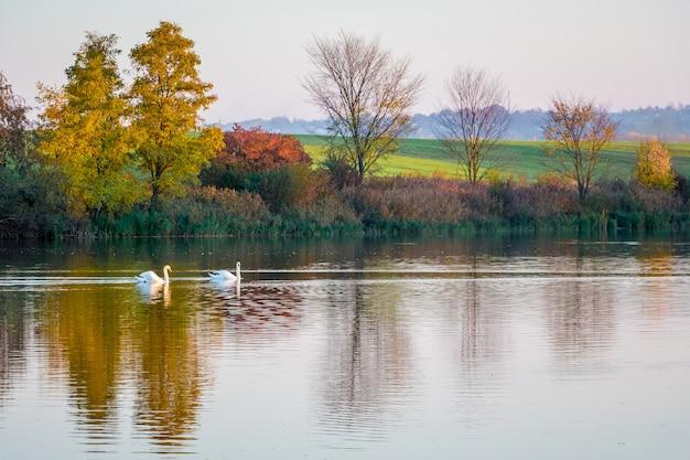 色とりどりの秋の木々を映す川に沿って2羽の白鳥が浮かぶ