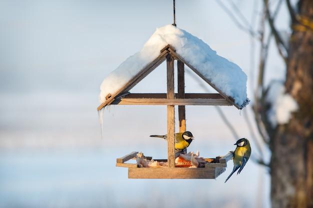 Две синицы в кормушке для птиц снежной зимой едят свиной жир