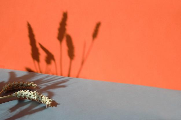 長い影、コピースペースをキャストする小麦の穂とツートンカラーのオレンジとグレーの紙の背景。