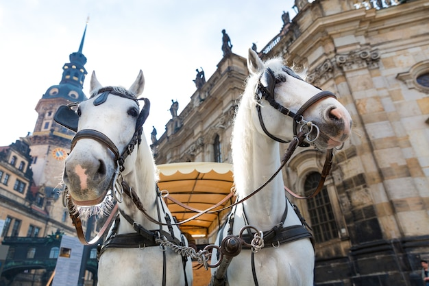 Two tour horse faces in old european town. summer tourism and travels, famous europe landmark, popular places and streets