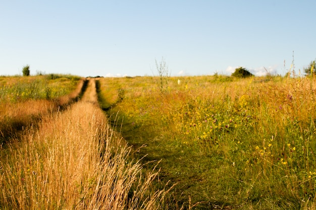 Two-track dirt road in a flowering grassy meadow