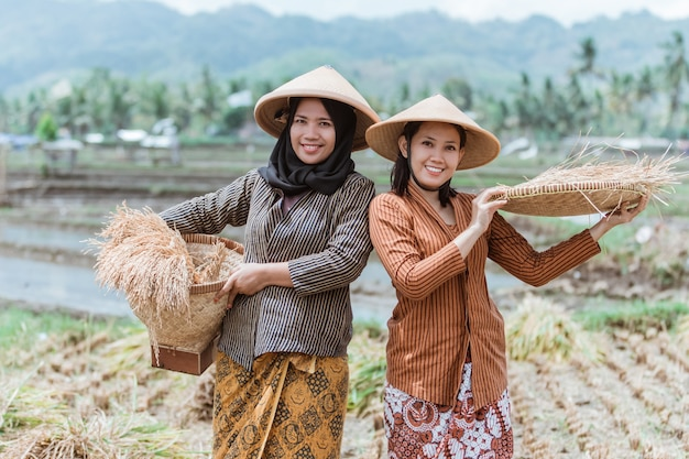 두 명의 전통적인 자바 농부가 논에 대나무 쟁반을 엮어 쌀 작물을 가져옵니다.