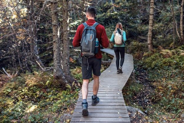 森の風景を見ながらバックパックを持って歩く2人の旅行ハイカー。背面図。