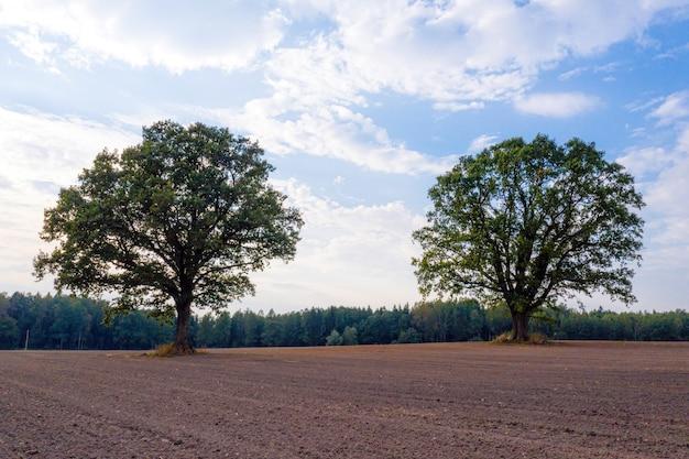 숲의 가장자리에 재배 된 농업 분야의 한가운데에 두 그루의 나무, 트랙터 트랙이있는 들판, 농업 산업의 개념