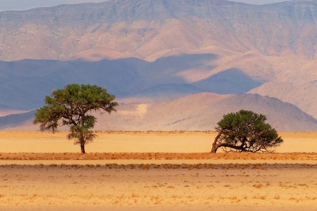 Два дерева на фоне песка и гор в пустыне намиб