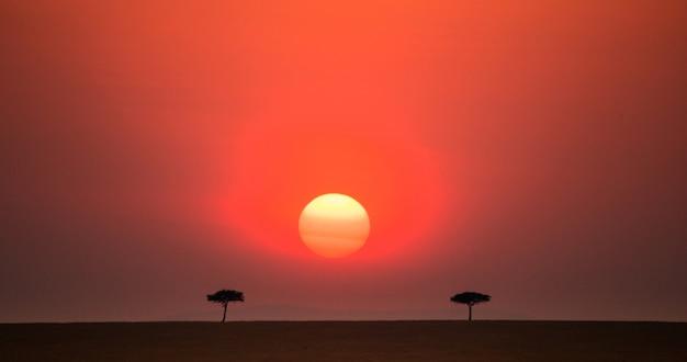 サバンナの夕日の背景に2つの木