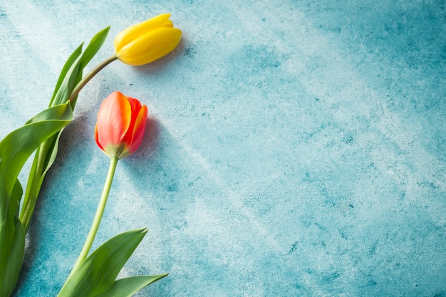 Two tulip flowers on table