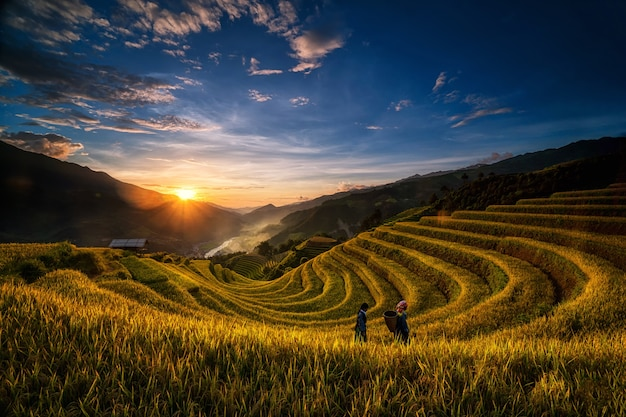 Two undefined vietnamese hmong are walking in the fantastic landscape of rice field terrace for prep