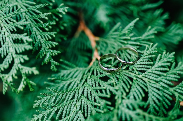 Two wedding rings on a branch thuja on green