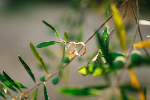 Two wedding rings for the bride and groom on a tree branch on a blurred background