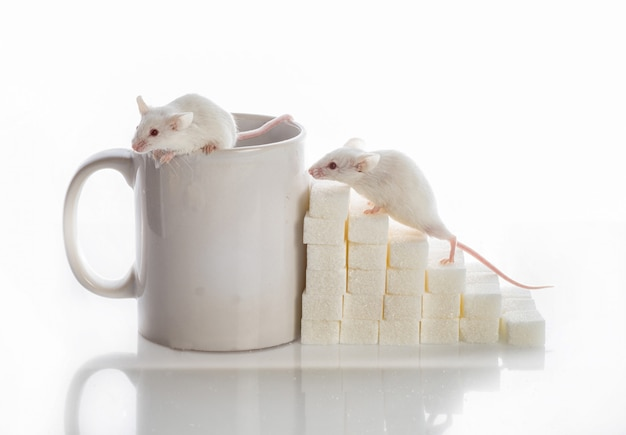 Two white  mice crawling up the stairs from the sugar cubes and a cup