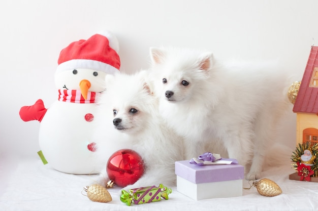 Two white pomeranian puppies sit surrounded by christmas toys, next to a snowman