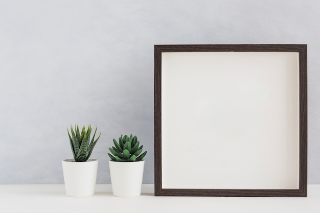Two white potted cactus plant with blank white photo frame on desk against wall