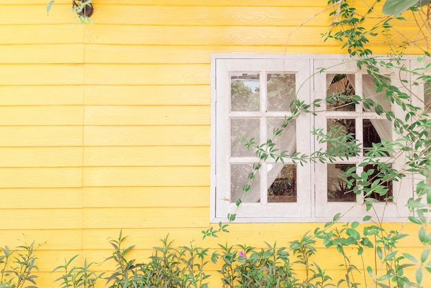 Two white window shutters on yellow woonden wall, green tree branch leaves building