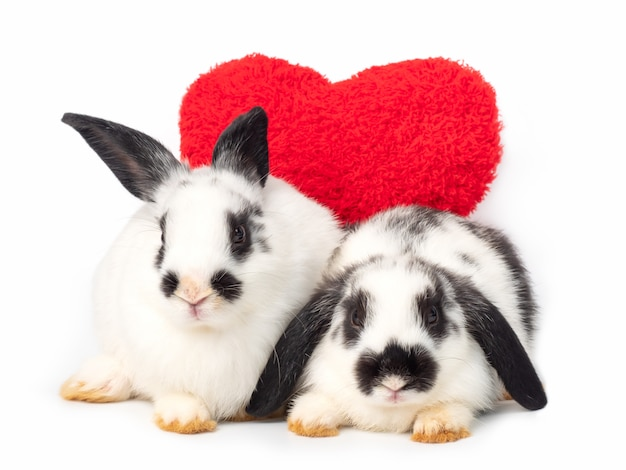 Two white young rabbits with red heart on white.