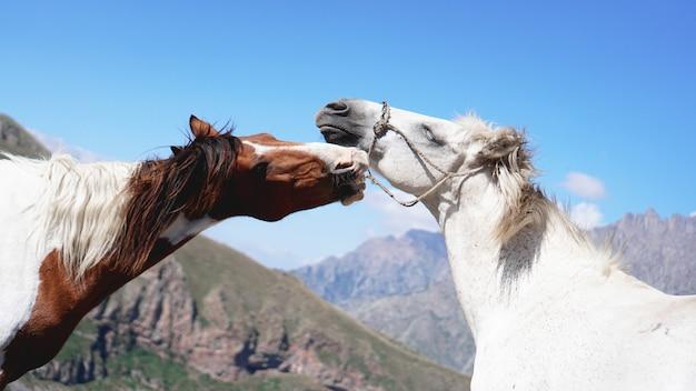 山の環境で放牧する 2 頭の野生の馬。美しい自然の背景
