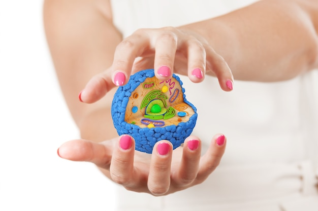 Two woman hands protecting structure of human cell on a white background. 3d rendering
