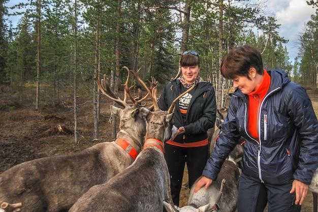 Two women feed reindeer, sami, saami village on the kola peninsula