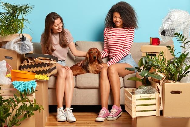 두 여자 친구가 소파에서 함께 휴식을 취하고 개봉하지 않은 상자로 둘러싸인 혈통 개와 놀아요.