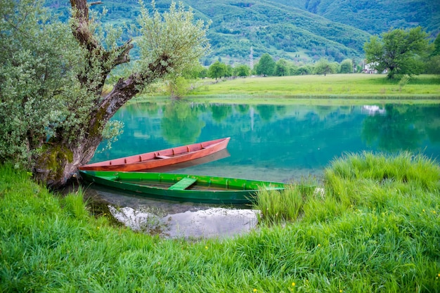 Two wooden boats are chained to the trunk of a tree on the shore.