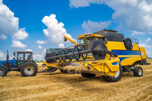 Two working gathering harvest machines. harvest gathering in gold field. dry wheat.