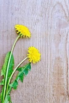 古いボードの背景に緑の葉を持つ2つの黄色のタンポポの花
