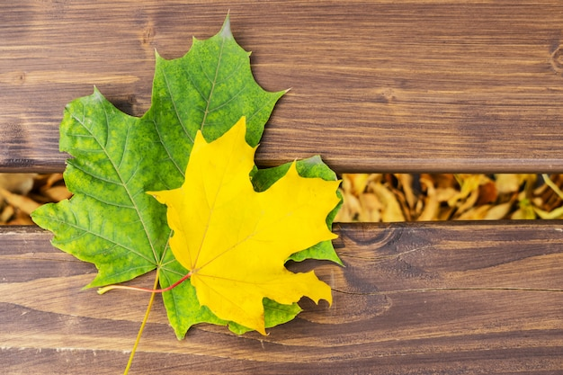 Two yellow and green maple leaf on a wooden bench. autumn leaves