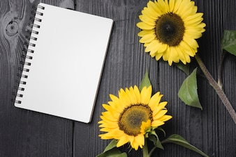 Two yellow sunflowers with blank spiral notebook on wooden table