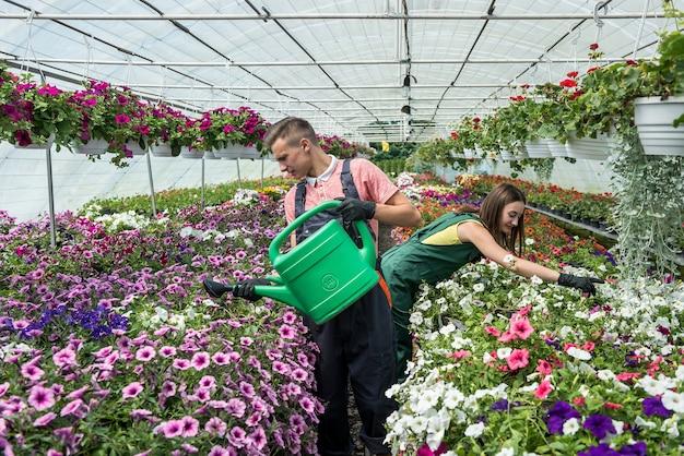 2人の若い農民が温室で働き、販売用の植物に接続して水をやります