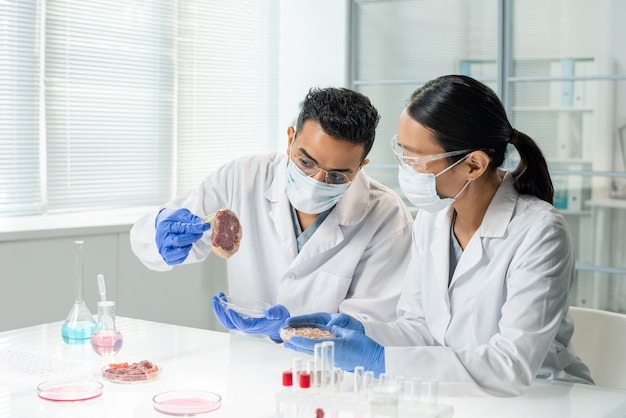 Two young intercultural researchers or clinicians in whitecoats and gloves studying features of one of samples of raw vegetable meat in laboratory