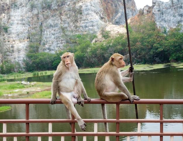 Two young monkeys sitting on rail bridge